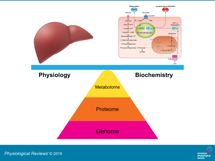 Metabolomics for Investigating Physiological and Pathophysiological Processes